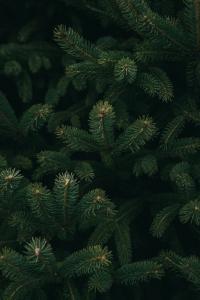 echte kerstboom brandvertragend impregneren