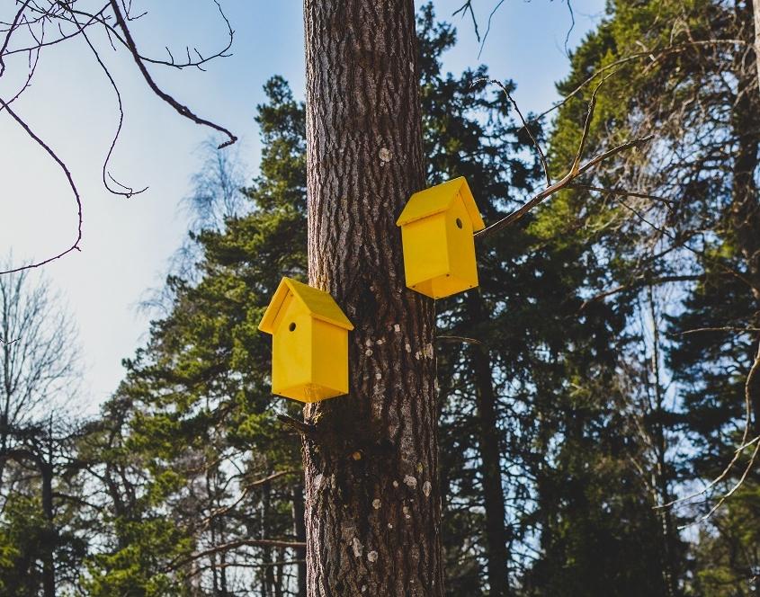 Opvallend gele vogelhuisjes voor detail in tuin